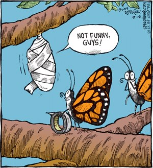 funny-butterfly