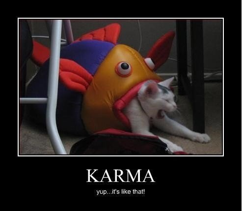 karma-is-a-bitch-cat